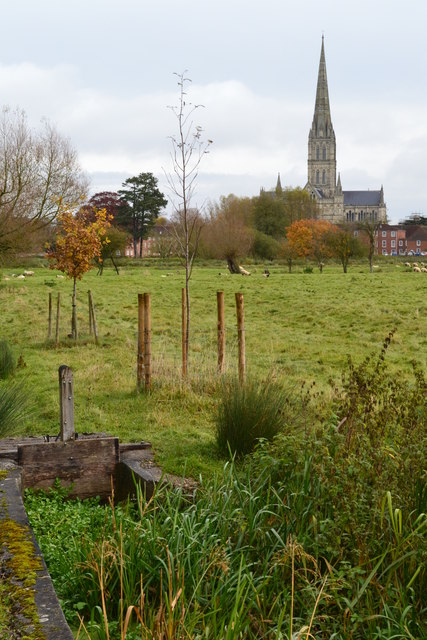 Harnham Water Meadows and Salisbury Cathedral