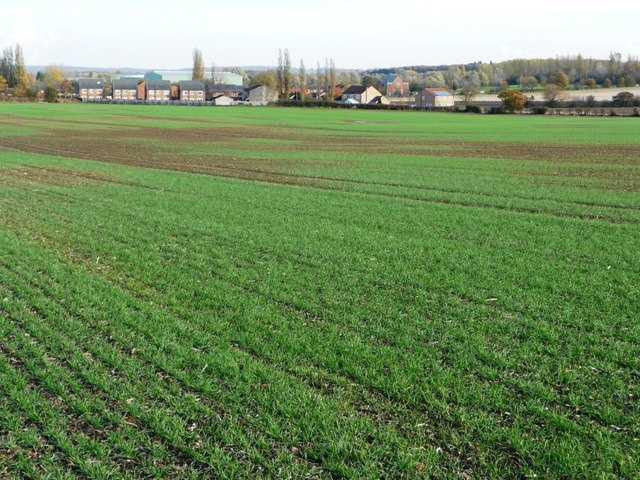 Patchy crop, south-west of Common Side Farm