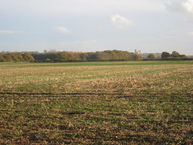South Carlton Fen