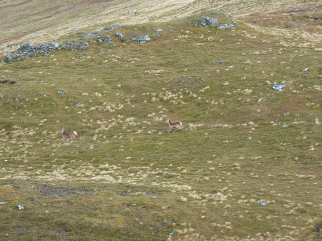 Deer fleeing over the bealach