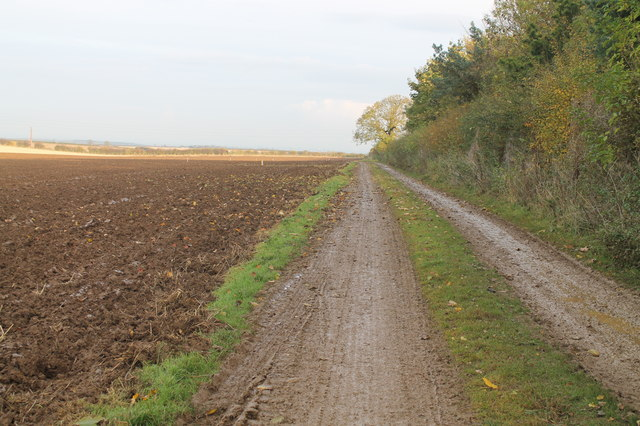 Farm track along woodland