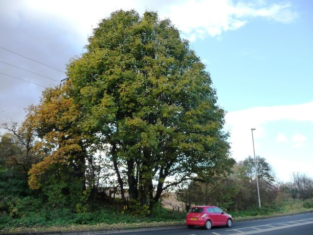 Autumn tree on the west side of the B6422