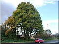 SE4311 : Autumn tree on the west side of the B6422 by Christine Johnstone