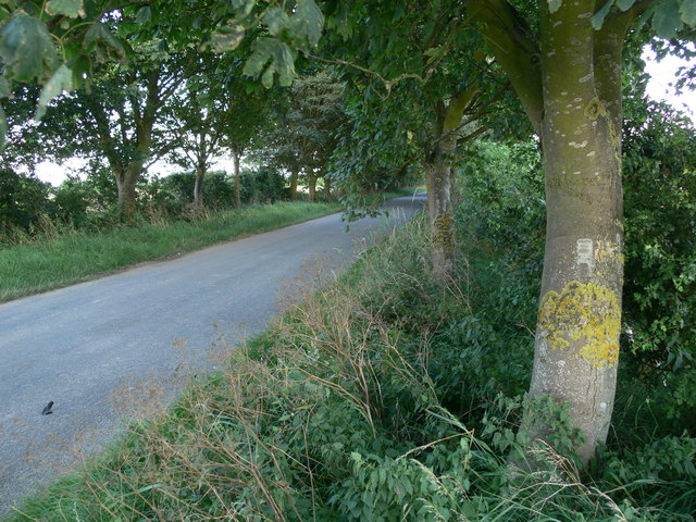 Tree lined road near Dawsmere