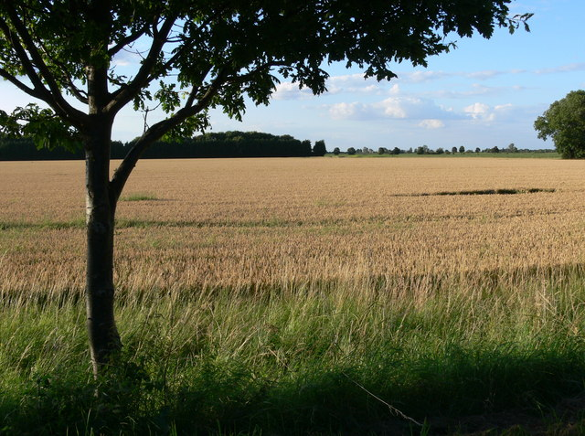 Farmland near Dawsmere