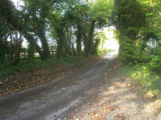 Lane by Lockley Copse