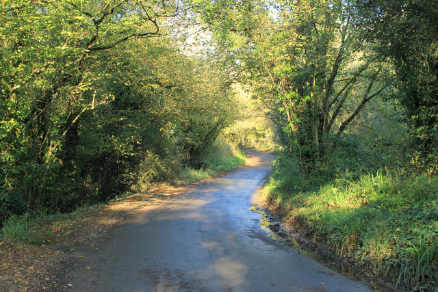 2012 : Bottom of Vining's Hill, Batcombe
