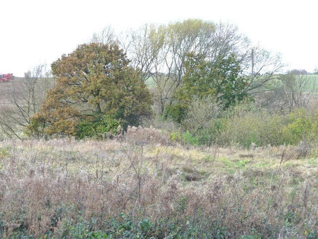Autumn colour at the issues, South Moor
