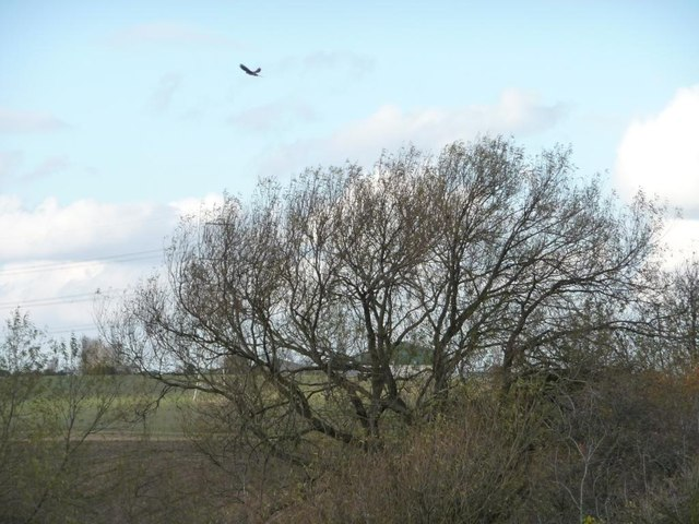 Kestrel hovering above the issues, South Moor [1]