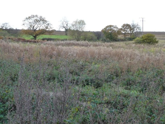 Uncultivated land at the issues, South Moor