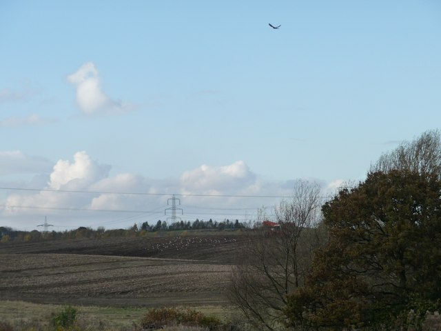 Kestrel hovering above the issues, South Moor [2]