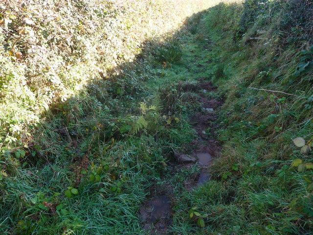 Hedged path