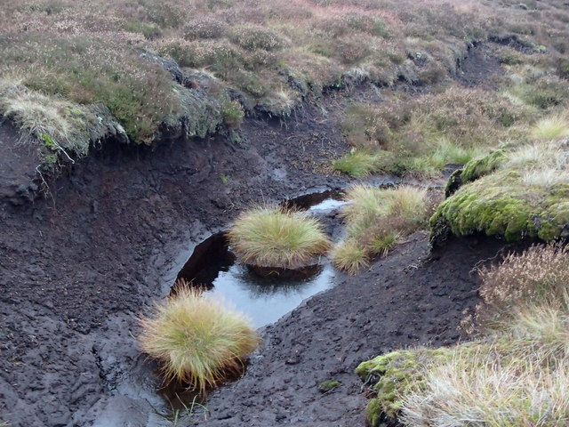 Moorland peat and grasses