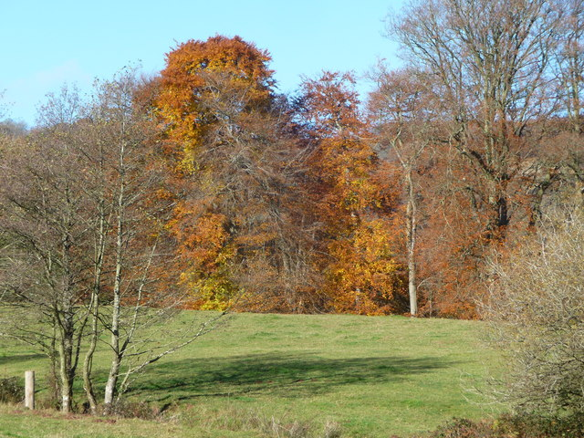 Autumn colour near Pandy Mawr farm