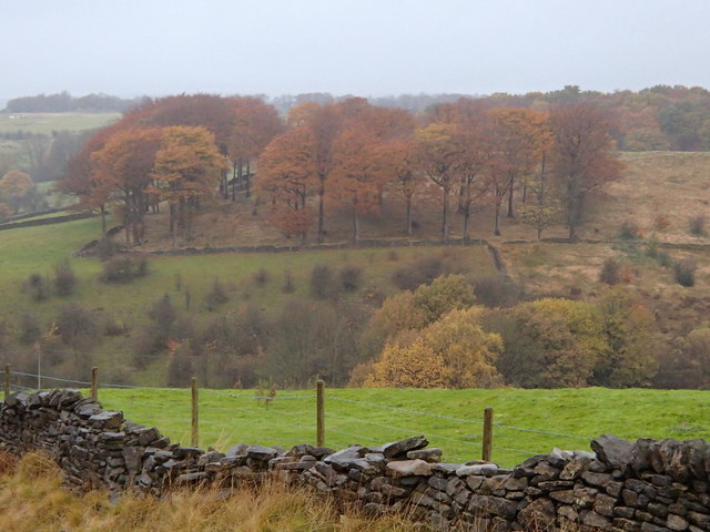 Fields and trees near Glossop