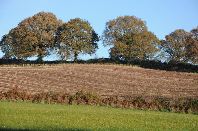 Trees and farmland