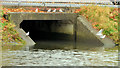 J3472 : Gulls and drain, River Lagan, Belfast by Albert Bridge