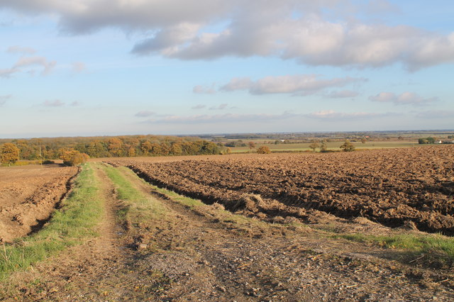 Farm track off Muckton Road