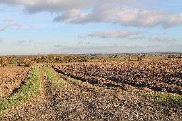 Farm track off Muckton Road