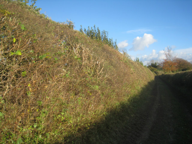 Cut today - a very high hedge