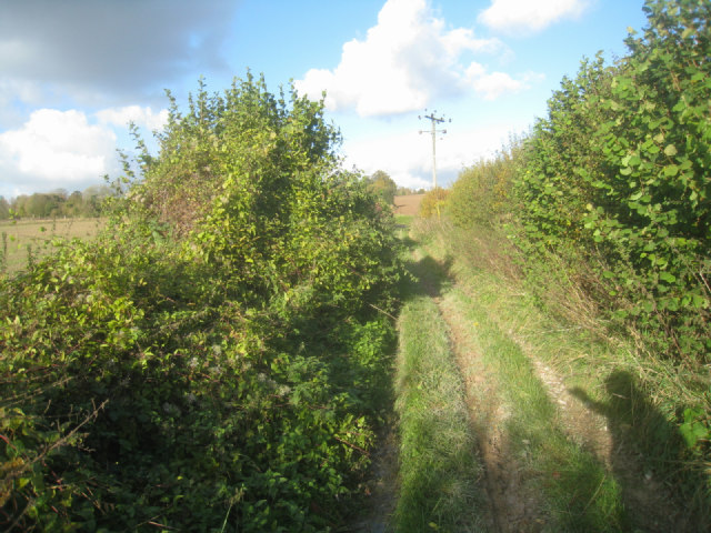 Woodgarston Lane (Track)