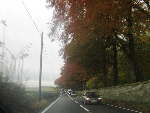 Autumnal A31