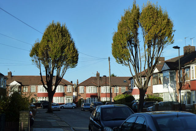 Trees at north end of Oakfield Gardens