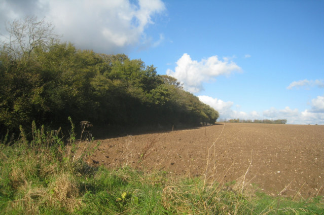 Un-named copse in Big Field (78.5 acres)
