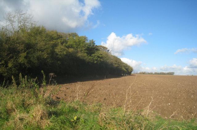 Un-named copse in Big Field (78.5 acres)