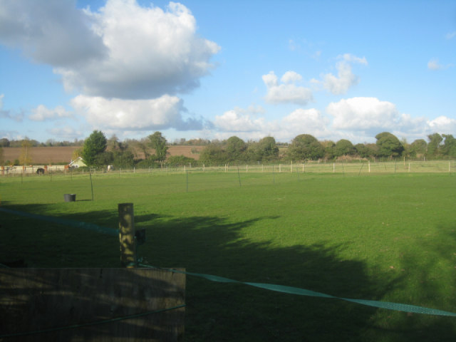 Paddock near Whitedown Farm