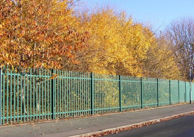 Autumn School Trees