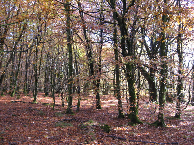 Woodland at Bracklinn Falls car park