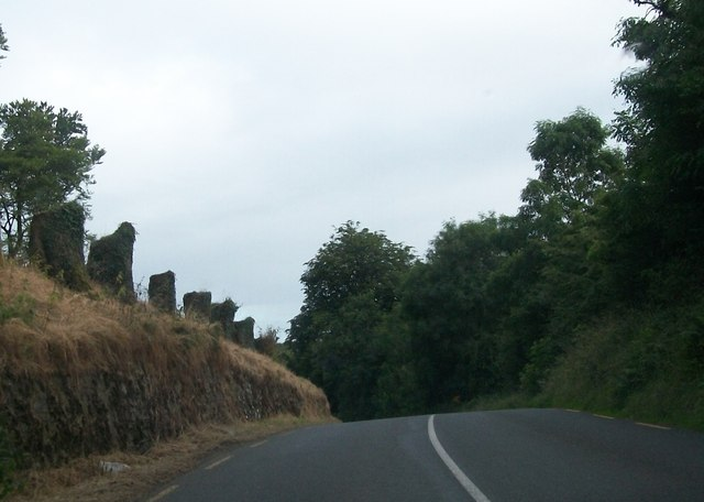 The stumps of an avenue of trees alongside the R183 north of Drumguff