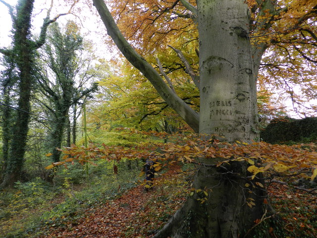 Mixed woodland, Edgehill