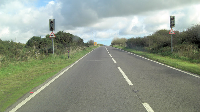 A30 cattle crossing on Racecourse Downs