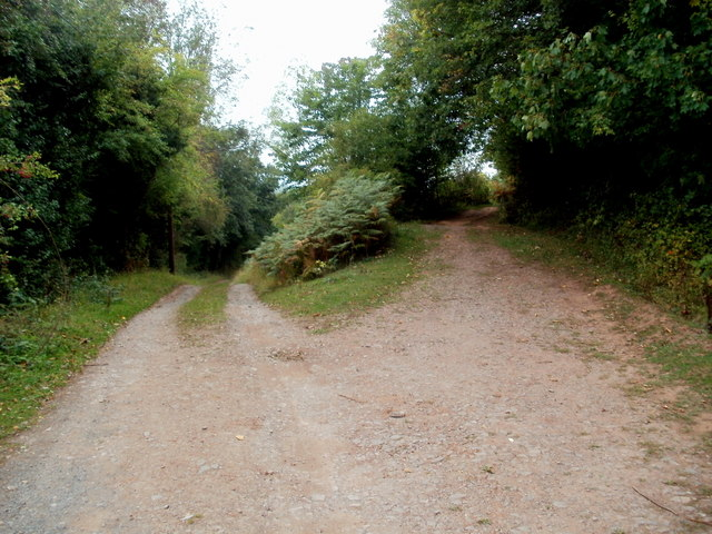 A fork in the track, Ewyas Harold Common