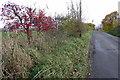TL0031 : Long Lane in Autumn by Philip Jeffrey