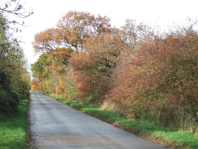 Autumn colours on Hollow Lane near Ramsey