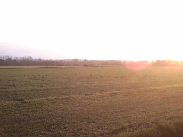 Fields of Necton