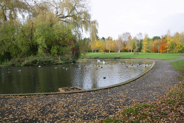 Ducks and swans on the pond in Cutteslowe Park