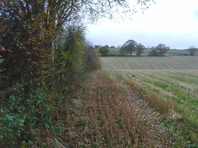 Hedge Row View