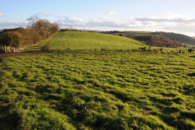 Farmland above Bettws Newydd