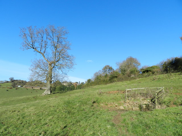 Ash tree and spring in a field near Ratley