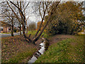 SJ8090 : Baguley Brook by David Dixon