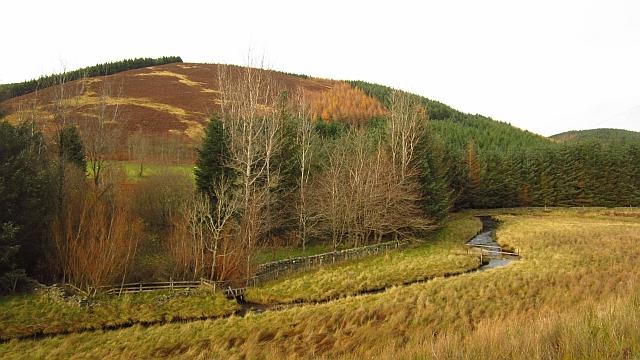 Forestry, Glenheighton