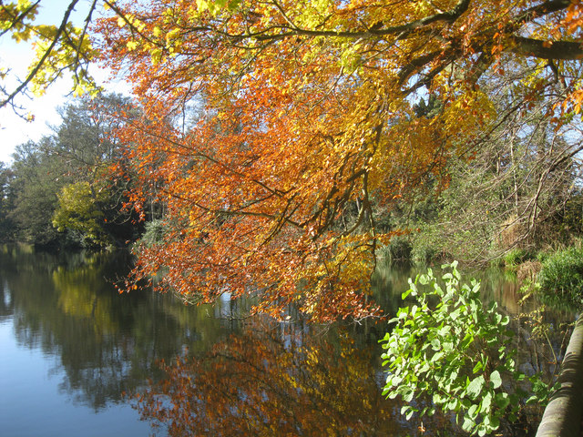 Autumn leaves reflected in China Pond