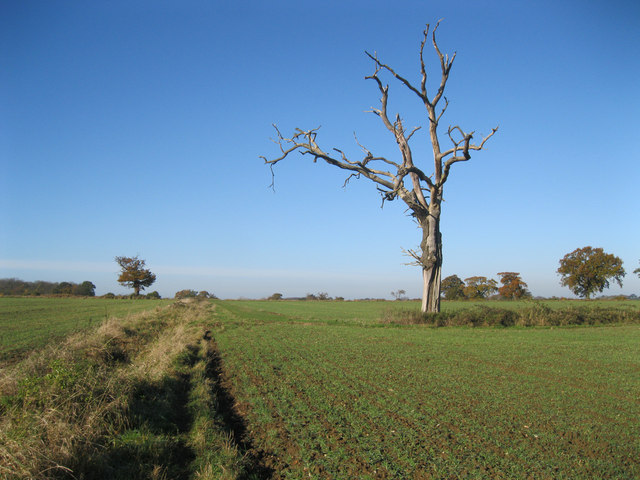 Dead tree near Dairy Wood