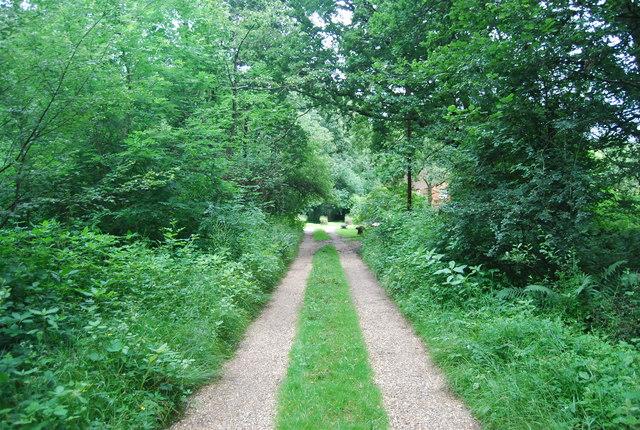 Bridleway to Hambledon Hurst