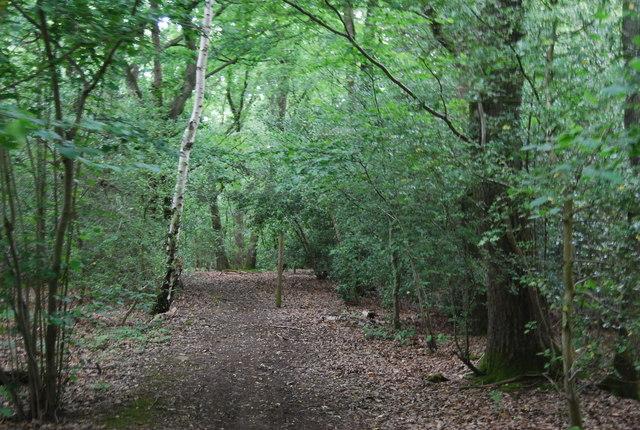 Bridleway, Hambledon Hurst