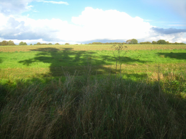 Field by the Wayfarer's Walk